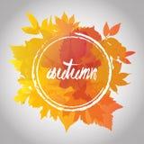 Χρώμα πτώσης υποβάθρου φθινοπώρου πτώσης leafes Στοκ Εικόνα