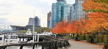 Χρώμα πτώσης, φύλλα φθινοπώρου στο λιμάνι άνθρακα, στο κέντρο της πόλης Βανκούβερ, Βρετανική Κολομβία Στοκ εικόνα με δικαίωμα ελεύθερης χρήσης