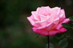 Χρώμα της αγάπης στοκ φωτογραφία με δικαίωμα ελεύθερης χρήσης