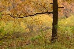 Χρώμα του χρυσού φθινοπώρου Στοκ Εικόνα