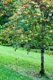 Χρώμα τριών αλλαγών στον κήπο στην πράσινη χλόη Στοκ Φωτογραφίες