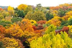 Χρώμα φθινοπώρου και άσπρος ουρανός Στοκ εικόνα με δικαίωμα ελεύθερης χρήσης