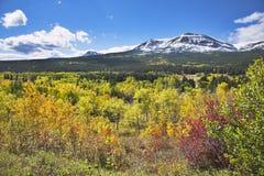 χρώμα φθινοπώρου πολυ στοκ εικόνα