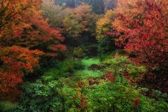 Χρώμα φθινοπώρου, πολιτεία της Washington Στοκ Εικόνες