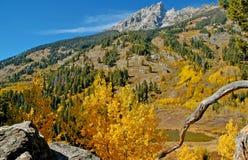 Χρώμα φθινοπώρου σε μεγάλο Teton, Ουαϊόμινγκ Στοκ εικόνες με δικαίωμα ελεύθερης χρήσης