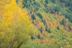 Χρώμα φθινοπώρου σε Arrowtown, Νέα Ζηλανδία Στοκ εικόνα με δικαίωμα ελεύθερης χρήσης