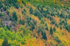 Χρώμα φθινοπώρου σε Arrowtown, Νέα Ζηλανδία Στοκ Εικόνες