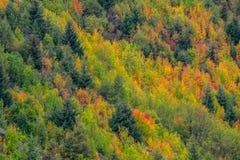Χρώμα φθινοπώρου σε Arrowtown, Νέα Ζηλανδία Στοκ Φωτογραφίες