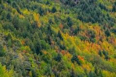 Χρώμα φθινοπώρου σε Arrowtown, Νέα Ζηλανδία Στοκ φωτογραφία με δικαίωμα ελεύθερης χρήσης