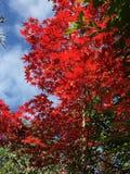 Χρώμα φθινοπώρου στο Κιότο Στοκ Εικόνες