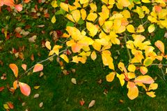 Χρώμα φθινοπώρου Στοκ φωτογραφίες με δικαίωμα ελεύθερης χρήσης