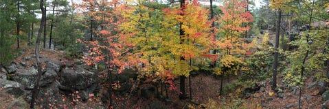 Χρώμα φθινοπώρου Στοκ Φωτογραφίες