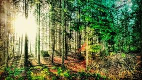 Χρώμα φθινοπώρου Στοκ εικόνα με δικαίωμα ελεύθερης χρήσης