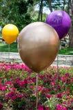 Χρώμα baloons και λουλούδια σε ένα πάρκο Στοκ φωτογραφία με δικαίωμα ελεύθερης χρήσης