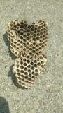 Χτένα μελιού από τις μέλισσες Στοκ φωτογραφία με δικαίωμα ελεύθερης χρήσης