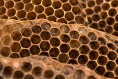 Χτένα μελιού με τη μέλισσα & x28 μελιού Apis mellifera& x29  φωλιά Στοκ Εικόνα