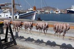 Χταπόδι στην Ελλάδα Στοκ Φωτογραφία