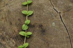 Χτυπημένος κάτω από τον κορμό Βάζα της αναρρίχησης φύλλων δέντρων και φυτών ευπαθούς ενάντια στον κορμό στοκ εικόνες