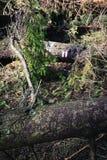 Χτυπημένος κάτω από το δέντρο με το σημάδι τουριστών στοκ εικόνα με δικαίωμα ελεύθερης χρήσης