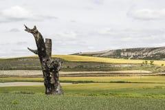 Χτυπημένο αστραπή δέντρο Στοκ εικόνα με δικαίωμα ελεύθερης χρήσης