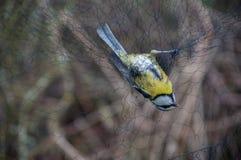 Χτύπημα πουλιών Στοκ εικόνες με δικαίωμα ελεύθερης χρήσης
