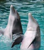 χτύπημα των δελφινιών στοκ εικόνα