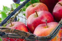 Χυμός δαμάσκηνων της Apple Στοκ εικόνα με δικαίωμα ελεύθερης χρήσης