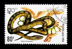 Χωρίστε σε τετράγωνα το φίδι (tessellata Natrix), ερπετά serie, circa το 1994 στοκ εικόνα