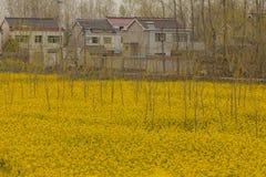 Χωριά και τομέας λουλουδιών canola Στοκ φωτογραφία με δικαίωμα ελεύθερης χρήσης