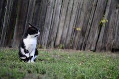 Χωριό γατών Στοκ Εικόνες