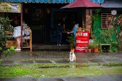 Χωριό γατών Houtong Διάσημος πληθυσμός γατών της Ταϊβάν στοκ φωτογραφία με δικαίωμα ελεύθερης χρήσης