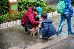 Χωριό γατών Houtong Διάσημος πληθυσμός γατών της Ταϊβάν στοκ φωτογραφία