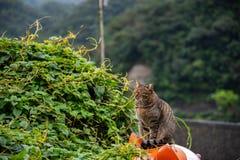 Χωριό γατών Houtong Διάσημος πληθυσμός γατών της Ταϊβάν στοκ φωτογραφίες