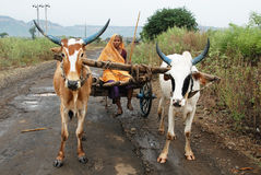 χωριό ζωής της Ινδίας Στοκ εικόνα με δικαίωμα ελεύθερης χρήσης
