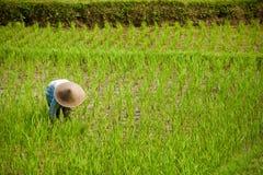 Χωριό τομέων ρυζιού Στοκ φωτογραφία με δικαίωμα ελεύθερης χρήσης