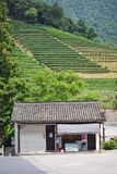 χωριό τσαγιού της Κίνας Στοκ Εικόνες