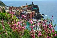 Χωριό Vernazza στους βράχους απότομων βράχων και τα λουλούδια του ροδάκινου Seascape σε πέντε εδάφη, εθνικό πάρκο Cinque Terre, Λ Στοκ φωτογραφίες με δικαίωμα ελεύθερης χρήσης