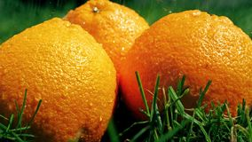 Χύνοντας νερό στα πορτοκάλια και τη χλόη, σε αργή κίνηση πυροβολισμός απόθεμα βίντεο