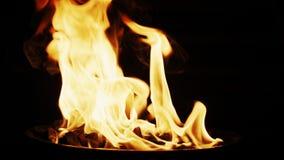 Χύνοντας ξυλάνθρακας ελαφρύτερο ρευστό στην πυρκαγιά σχαρών σχαρών Σε αργή κίνηση πυροβολισμός στην κόκκινη κάμερα φιλμ μικρού μήκους
