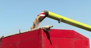 Χύνοντας σιτάρι καλαμποκιού στο ρυμουλκό τρακτέρ μετά από τη συγκομιδή Prores, σε αργή κίνηση απόθεμα βίντεο