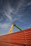 Χύνοντας σπόροι αραβόσιτου καλαμποκιού Στοκ Εικόνα