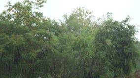 Χύνοντας τροπική βροχή πτώσεις της βροχής στα πλαίσια των πράσινων δέντρων r απόθεμα βίντεο