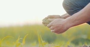 Χώμα, γεωργία, χέρια αγροτών που κρατά και που χύνει το πίσω οργανικό χώμα απόθεμα βίντεο