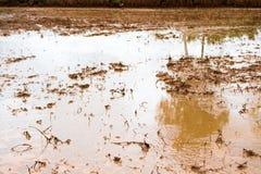 Χώμα για το ρύζι Στοκ φωτογραφία με δικαίωμα ελεύθερης χρήσης