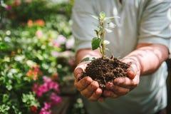 Χώμα εκμετάλλευσης ατόμων ανθοκόμων στα χέρια του Ένας νεαρός βλαστός στα χέρια ενός καλλιεργητή λουλουδιών Στοκ φωτογραφίες με δικαίωμα ελεύθερης χρήσης