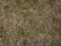 Χώμα με το ξηρό υπόβαθρο χλόης Άνευ ραφής σύσταση του εδάφους με τα ξηρά χορτάρια Στοκ Εικόνες