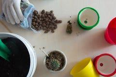 Χώμα, δοχεία, κάκτοι και έδαφος Στοκ φωτογραφία με δικαίωμα ελεύθερης χρήσης