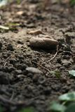 χώμα Στοκ φωτογραφία με δικαίωμα ελεύθερης χρήσης