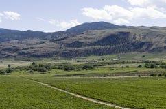 Χώρα 12 κρασιού κοιλάδων Okanagan Στοκ εικόνα με δικαίωμα ελεύθερης χρήσης