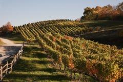 Χώρα κρασιού της Βιρτζίνια το φθινόπωρο Στοκ Εικόνες